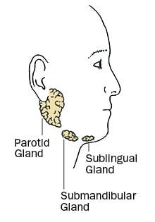 Spit Gland Infection, Parotid Gland, Sublingual Gland, Submandibular Gland